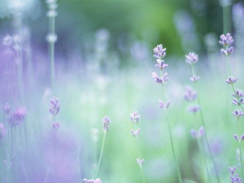 soft_focus_sweet_flowers_jk030_350a