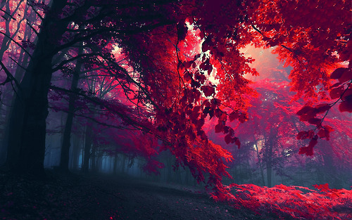 beautiful-nature-photo-photography-Favim.com-981808
