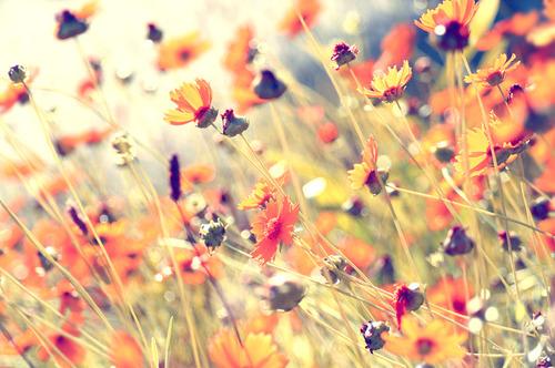 flowers-grass-nature-photography-plants-pretty-Favim.com-55172