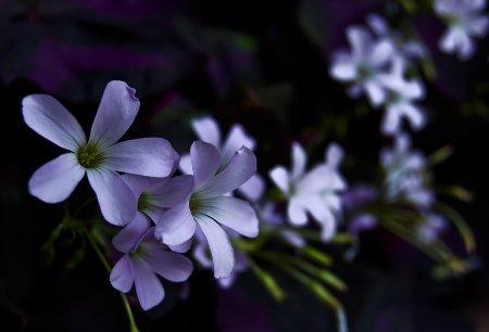 night_flowers_by_andashd