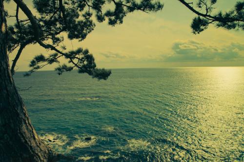 scene,japan,light,ocean,tree-28abb0e99eb65698f2f9d93e5b3e6fb8_h